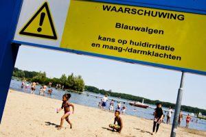 bezoekers aan het strand van de kralingseplas moeten uit kijken voor blauwalg